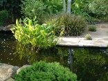 Ponds and Koi Pools